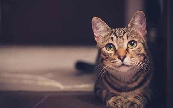 猫がストレスなく暮らせる別荘リフォーム