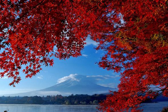 【紅葉】きっと行きたくなる、紅葉狩りの豆知識