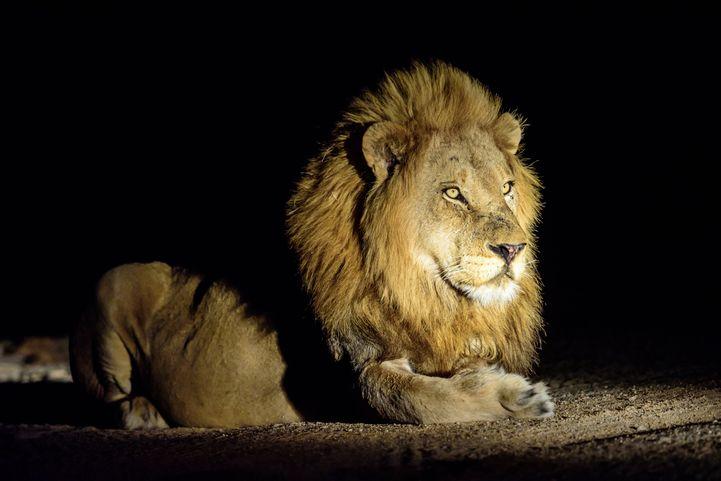 【レジャー】今、動物園は「夜」が熱い!? 家族で行きたい関東近郊のナイトサファリ