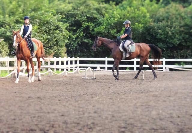【乗馬】今年こそ乗馬を......始める前にまず知っておきたいこと