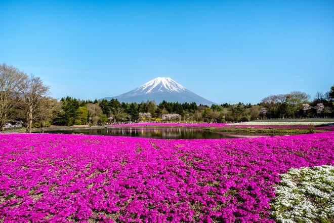 【観光】春~初夏だからこそ出会える景色!富士五湖周辺のお出かけスポット
