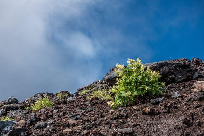 【ハイキング】富士山麓ならではのユニークな生態系に出会う夏旅