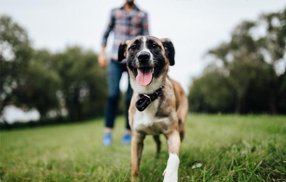 愛犬にもストレスはある!「犬の都会暮らし」で気をつけたいポイント