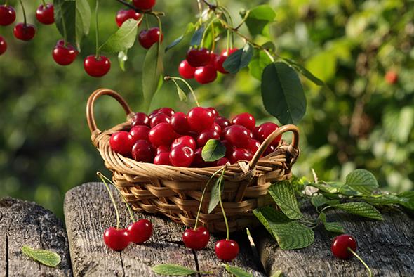 【フルーツ】富士山麓・山梨県で味わいたい、今が旬の果物