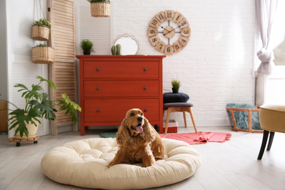 雨で散歩に行けなくても大丈夫!愛犬と室内で遊ぼう