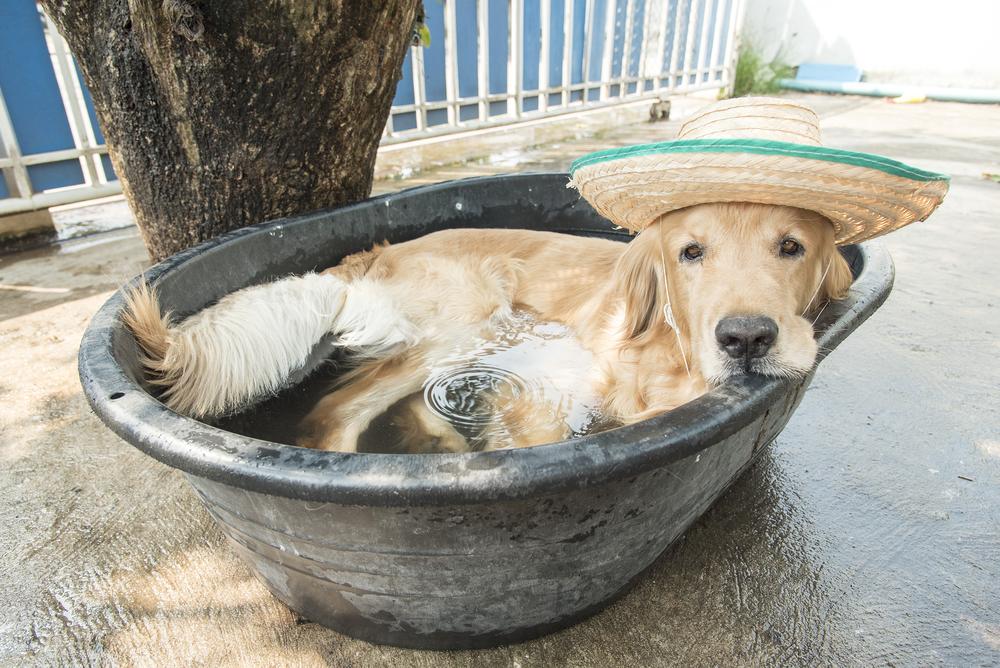 愛犬にも対策が必要!犬の熱中症予防のポイントとは?