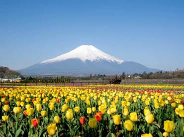 山中湖花の都公園