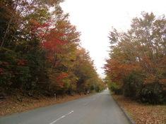 十里木各地の紅葉