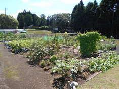 夏の農園風景