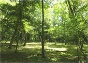 2011年新分譲地第2弾「憩いの森」販売開始。