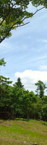 山中湖の森シリーズ 山中湖の中心、アクセス至便な「くつろぎの森」。今夏新発表。