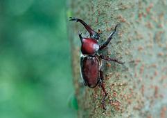 別荘地内での昆虫採集