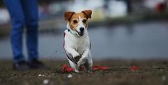 ドッグイベント第2弾開催!【愛犬撮影会/わんわんプール/トリミング体験/リフォーム相談】