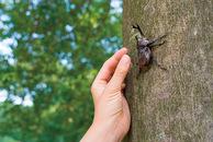 毎年恒例の別荘地内での昆虫採集