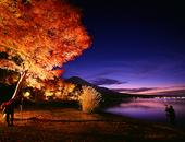 日本の渚百選に選ばれた、山中湖の絶景スポットの一つ「夕焼けの渚」を含む旭日丘地区湖畔緑地公園で「夕焼けの渚・紅葉まつり」が今年も開催されます。