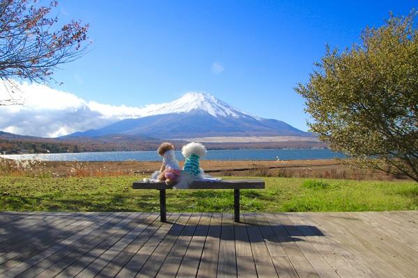 ワンちゃんと富士山.jpg