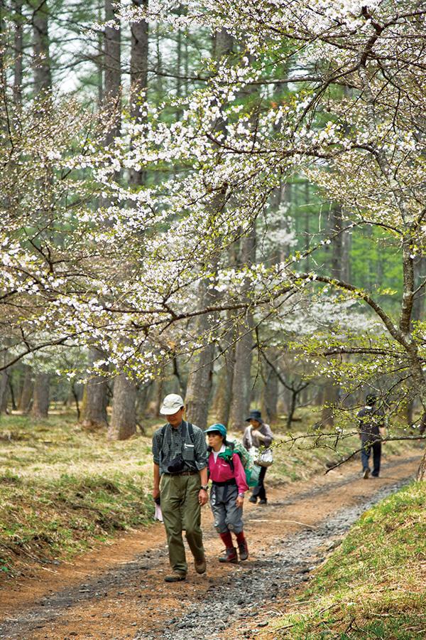 富士桜ハイキング(中の茶屋周辺散策)