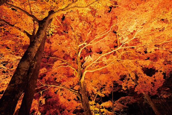 山中湖「夕焼けの渚・紅葉まつり」