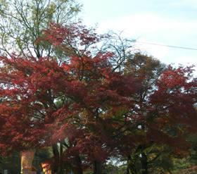 「夕焼けの渚・紅葉祭り」 終了しました。