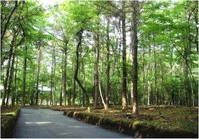 2011年新分譲地第1弾「木漏れ日の森」販売開始。