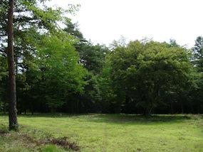 2011年新分譲地第4弾「やすらぎの森」販売開始。