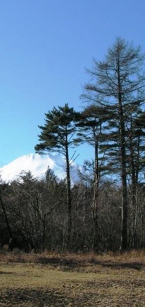 新発表!85周年記念新プロジェクト「ぬくもりの森」。