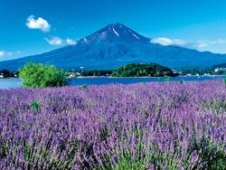 富士山講座「富士山文化遺産を巡る2日間」 (マイクロバス観光と車内講座)